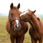 Лошади в Казахстане