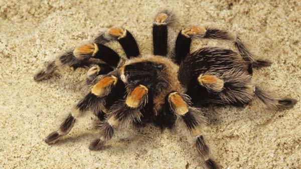 пауки в Казахстане