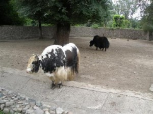 almaty-zoo