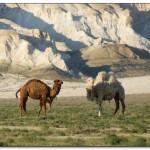 Отдых в Западном Казахстане