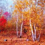 Осень в Казахстане