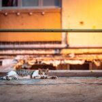 В Алматы чипируют 45 тысяч домашних животных